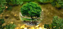 çevre kirliiliği